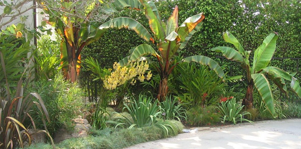 Succulent Garden With Kangaroo Paw U0027Harmonyu0027 And Plants In Los Angeles ...